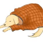 要介護状態の老犬