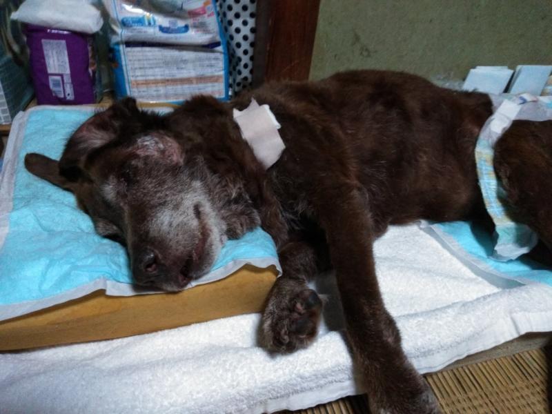 大型犬の要介護状態